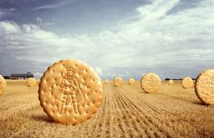Field Of Cookies by Chris Frazer Smith