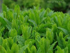 Estáis preparados para oler?#Aromáticas #Molyvade...#cocinillas molyvade.blogspot.com