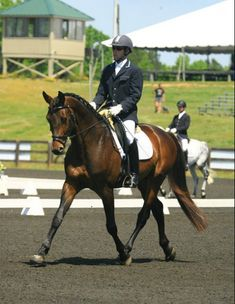 Show Horse Gallery - Tatendrang, Trakehner
