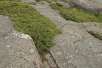How to Grow Moss Between Stones on a Patio (6 Steps) | eHow
