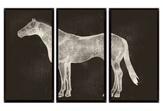Horses Three-Panel Wall Art Black - Printed with high-gloss laminate on a lacquer box, this animal-themed artwork makes a dramatic statement with its reverse-image silhouette. Off White Walls, My Ideal Home, Panel Wall Art, Equestrian Style, Triptych, Horse Art, Wall Art Prints, Art Photography, Horses