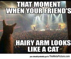 I Still Think It's A Cat