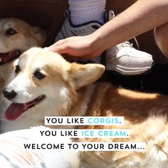 OMG! Corgi Con is the best thing ever for dog lovers!