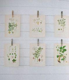 Wildflower inspiration1