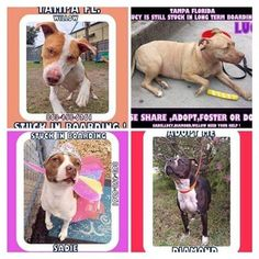The four dogs still in boarding almost a year later. Diamond was just adopted.
