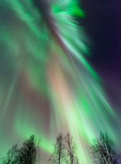 The skies above Alaska certainly made up for the shortage of four-leafed clovers and leprechauns in the arctic on St. Patrick's day, turning all shades of green (along with some purple, red and orange for variety). Here a stand of leafless aspen in the foreground gawk at the show above, which lasted nearly the entire night. http://flic.kr/ps/oP2zW