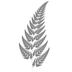 fern drawing - Google Search