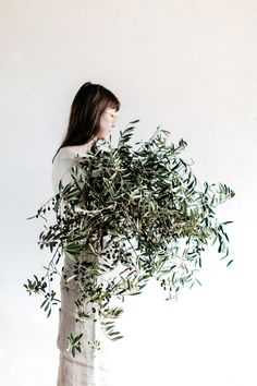 Olive tree foliage from Sophie Hansen's family home in Rydal, Blue Mountains. My beautiful muse Ella Bendrups . Ikebana, Bouquet, No Rain, Tree Photography, Foliage Plants, Olive Tree, Arte Floral, Green Plants, Mode Inspiration