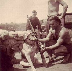 A dog being posed by a German soldier, 1940 .