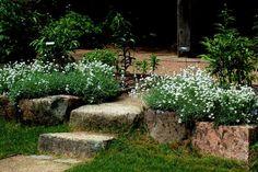 10 Perennials That Thrive in Full Sun