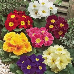 Glorious Enjoy Life With Your Own Flower Garden Beautiful Easy Ideas. Enjoy Life With Your Own Flower Garden Beautiful Easy Ideas. Flowers Garden, Garden Plants, Planting Flowers, Flowering Plants, Flower Gardening, Best Perennials For Shade, Primrose Plant, Plants Under Trees, Early Spring Flowers