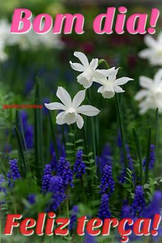 Plants, Days Of Week, Good Morning Wishes, Thoughts, Happy, Good Afternoon, Nighty Night, Flowers, Plant
