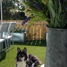 #happydog at #dunsterbeach #dunsterbeachhuts #somerset