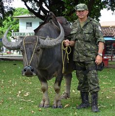 Police buffalo - Marajo Island - Brazil