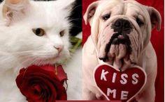 Talking Pets 9th Feb 2017 - Dr Jo's Blog