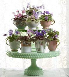 African violet arrangement in tea cups on milk glass cake stands.