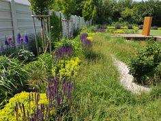 """Kvetinový záhon, ktorý je ladený v odtieňoch fialovej a zelenej. Na foto možno vidieť kvitnúť fialovú Salvia nemorosa """"Caradonna"""" spolu so žltozelenou Alchemilla mollis """"Auslese"""", ktoré vytvárajú príjemný kontrast. Plants, Plant, Planets"""