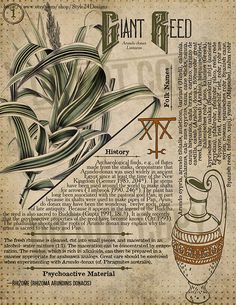 Giant Reed Book of Shadows page, Ritual Poisonous Plants - Herbal Magic, Magic Herbs, Wiccan, Witchcraft, Witch Spell, Poisonous Plants, Practical Magic, Magic Spells, Book Of Shadows