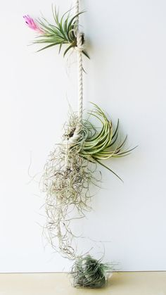 Air Plant Rope  - Succulent Terrarium, Home and Living, Gift , Plant , Living Home Decor , Glass Vase, Planter, Gothic