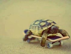 Turtle ❤ on a longboard