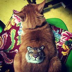 トラを背に持つ男 #boriscat