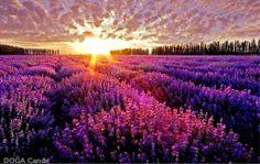 Campo florido...maravilhoso!!!