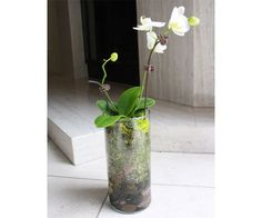 How to Plant Orchids in Glass Terrarium Vases | POPSUGAR Home
