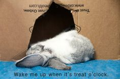 Rabbit Ramblings: Another cute bunny meme