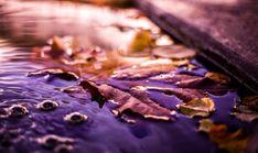 l'automne dans ses couleurs Autumn Inspiration, Etsy, Food, Handmade Gifts, Colors, Fall Season, Essen, Yemek, Meals