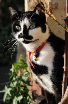 What incredible markings this cat has. Truly beautiful.