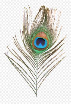 peacock psd images కోసం చిత్ర ఫలితం