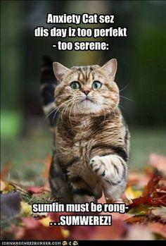 Anxiety Cat sez dis day iz too perfekt- too serene: sumfin must be rong- . . .SUMWEREZ!