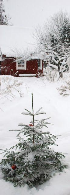 Julias Vita Drömmar: Jul