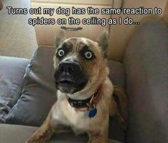 Calcium For Dogs: Why Is It Important And How Can They Get More? - Funny Dog Quotes - Funny Animal Pictures Of The Day 23 Pics The post Calcium For Dogs: Why Is It Important And How Can They Get More? appeared first on Gag Dad. Funny Animal Jokes, Funny Dog Memes, Cute Funny Animals, Funny Animal Pictures, Animal Memes, Dog Pictures, Funny Cute, The Funny, Funny Dogs