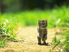 【猫=自由、、、】  猫ってやっぱり自由だなぁ、 と痛感してしまう ほんわか猫画像22選!!  読んでみる ↓ ↓ ↓
