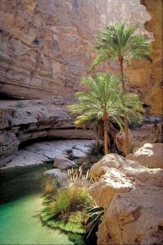 The cool, terraced pools of Wadi Shab, Oman were home to the Red Bull Cliff Diving World Series in Places In Nature) Desert Oasis, Desert Life, The Places Youll Go, Places To Visit, Beautiful World, Beautiful Places, Sultanate Of Oman, Abu Dhabi, Beautiful Landscapes