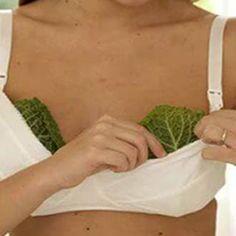 Mette delle foglie di cavolo sul seno e, poco dopo, si sente un'altra. E, soprattutto, ha un altro seno. Davvero. Ma che razza di cosa strana. Che cosa mai accadrà appoggiando sul seno delle foglie di cavolo? Il cavolo è ricco di zolfo e di lipidi e l'olio delle foglie è composto da braxicina, nota per le sue proprietà antinfiammatorie. Tra le altre cose, le foglie di cavolo disinfettano, leniscono, stimolano la circolazione del sangue, attenuano il dolore e hanno proprietà antimicrobiche…