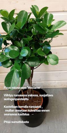 Tarinat • Instagram Plant Identification, Planting Flowers, Plants, Instagram, Flora, Plant