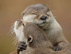 Prairie Dog hug