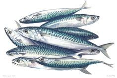 Cornish Mackerel Art Picture