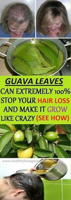 Health Benefits of Guava Leaves: Hair – Guava leaves are a great remedy for hair loss. They contain vitamin B complex (pyridoxine, riboflavin, thiamine, pantothenic acid, folate and niacin) which stops the hair fall and promotes hair growth. Boil a handful of guava leaves in 1 litre of water for 20 minutes. Then remove from heat … #Herbalhairgrowth