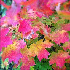 #Autumn in #KawarthaLakes #Ontario #Canada