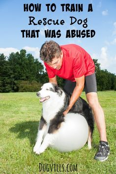 Not sure that standing over or hugging an abused dog is a good idea , but the other tips are good! How To Train A Rescue Dog That was abused