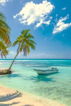 Tropical Beaches With Palm Trees Dream Vacations, Vacation Spots, Places To Travel, Places To Visit, Travel Destinations, Beach Wallpaper, Photos Voyages, Tropical Beaches, Beach Scenes