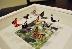 How to make a butterfly shadow box with paper butterflies
