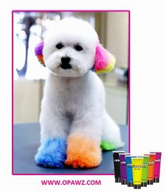 Thanks Aishin Pet Grooming School share the photo.  In OPAWZ we focus on luxury pet products standing for quality and style for the fashion conscious, well trained, human who love to spoil their pets.www.opawz.com