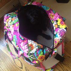 "DIY dog carrier made from Vera Bradley's ""weekender"" bag"