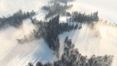 La forêt étoilée - C