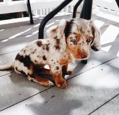 20 baby animals that are so cute it's ridiculous! 20 baby animals that are so cute it's ridiculous!,Animals Cute baby dachshund Related posts:Lace Vision Bügel-bh Miss Mary of Sweden - cuteDamen Wintersportjacke Super Cute Puppies, Cute Baby Dogs, Cute Dogs And Puppies, Doggies, Weenie Dogs, Cutest Dogs, Pet Dogs, Cute Funny Animals, Cute Baby Animals