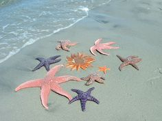 beaches, shell, beach paintings, seas, color, stars, the ocean, starfish, at the beach